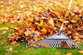 Fall Clean Up Services by Pro Landscaping